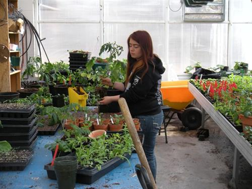 Preparing plants for sale