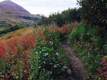 Gold Mint Trail - Hatcher Pass